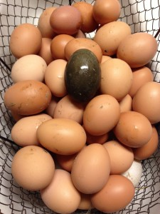 Black Egg42